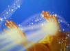 Le Nectar du Lotus mains
